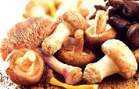 Fajnová houbová omáčka