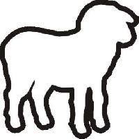 Jako ovce na porážku....