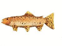 Tilapie – ryba s delikátní chutí