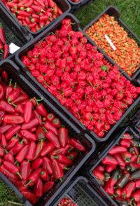 Nejp�liv�j�� chilli om��ky vyr�b�j� v Nov� Pace