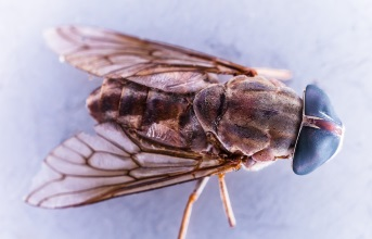 Jak se zbavit obt�n�ho hmyzu